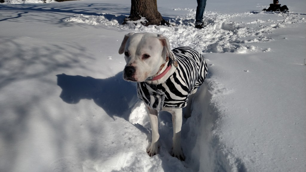 Dressing your children for cold weather, even your canine children